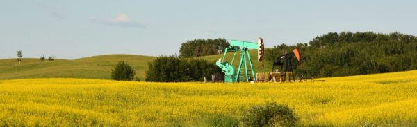 Oil prices steady, head for modest weekly rise